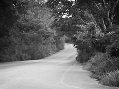 Mistery Road (L0rD @Draa$ D3 R3gI|) Tags: thedarkside carretera dia rural