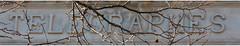 Je vous parle d'un temps.... (Pi-F) Tags: marquepage ptt postes télégraphe ancien temps télégramme édifice fronton hiver branche nue arbre sculture public