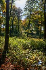 """Automne en sous bois """"2017"""" (Christian Labeaune) Tags: 2017 paysages christianlabeaune châtillonnais forêt sousbois automne forêtsousbois chatillonsurseine21400 france côtedorbourgognefranchecomté"""