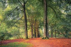 all-encompassing (Ingeborg Ruyken) Tags: dropbox autumn october fall flickr ochtend trees wamberg bomen bosfilmpje oktober 500pxs natuurfotografie morning 2017 bos forest
