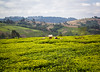 Tea plantations in Tanzania (CIFOR) Tags: livingconditions foodproduction householdexpenditure foodsecurity foodsupply landscape foods teaplantation foodavailability socioeconomics income povertyalleviation plantations agriculturalproducts tea householdincome mufindi iringaregion tanzania tz