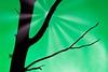 Sun Behind Tree (micha-m) Tags: tree baum ast branch grün green abstract art sun sonne beam