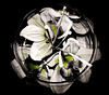 fiori (enzo 74) Tags: firoi bw desaturate