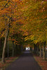 The road to autumn (Jessie van Weert) Tags: wonderful wideangle warm wide wolken explore extreme extreem trees tree yellow dynamic mysterious dynamisch day uitzicht outdoor outside sun sunshine interesting impressive incredible nikon d3100 nice light field photography plant plants adorable atmosphere staatsbosbeheer sigma depthoffield depth dof flickr fotografie fabulous gorgeous green groothoek holland bijzonder landscape landschap licht zon view veld beautiful blue netherlands nature ngc natuur natuurgebied natuurmonumenten magical sky heide heath grass forest park autumn herfst bos wood road trail leaf
