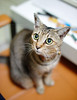 Bill the girl (Steve only) Tags: sony nex3 中一 中一光學 zhongyi speedmaster 09535mm 35095 f095 35mm bill cats