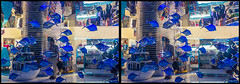 Wall-aquarium of Souvenir shop at Dubai Mall (urix5) Tags: dubai dubaimall aquarium fish wall shop 3d stereo stereoscopic stereoscopy stereopair crossview crosseyed