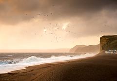 Year's End (Sarah_Brooks) Tags: stormy stormlight landscape seascape sea jurassiccoast dorset freshwater goldenhour drama birds wild