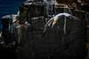 Gannet (Brett of Binnshire) Tags: capestmarysecologicalreserve wildlife water locationrecorded bird ocean shoreline newfoundland scenic canada cliff animals capestmarys