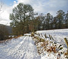 Winter Trail (eric robb niven) Tags: ericrobbniven scotland dunkeld perthshire landscape dundee walking winter springwatch