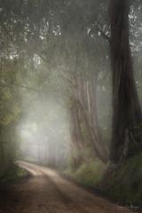 When the Fog Lifts, Sunshine Follows (SharonWellings) Tags: fog drive road trees adelaide adelaidehills australia sharonwellings