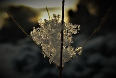 Delicate Snow..x (Lisa@Lethen) Tags: snow flakes grass sunrise winter weather macro delicate nature