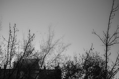 Hallowed Winter (Jesús Simeón) Tags: blueskies frozenbreath nakedbranches blackandwhite blackwhite monochrome sky redbrick