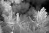 IMG_3470 (monika.carrie) Tags: monikacarrie scotland aberdeen winter ice icecrystal macro