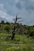 (gvlachos) Tags: deadtrees trees olympus sky
