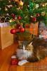 Christmas-2018-DSC6440 (fatima_suljagic) Tags: cat fineartprints photography photographer pets christmas christmas2018 melbourne australia fatimasuljagic artstudiomaja christmastree