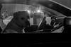 Conduite accompagnée (cactus2016) Tags: noiretblanc blackandwhite parlafenêtre chien streetphotography rue regard
