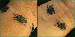 My very own shieldbugs! (rockwolf) Tags: shieldbug tattoo hemiptera heteroptera insect pentatomidae punaise tatouage shropshire adornstudio shrewsbury annagarvey rockwolf