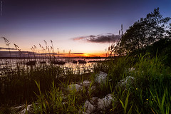 Evening at the Lake (Ray Moloney Photography) Tags: ifttt 500px trees sky sunrise lake sunset water nature blue light clouds twilight beautiful grass pier green dawn long exposure dusk idyllic tranquility riverbank reeds raymoloneyphoto