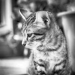Cute mini tiger! 🐯 (stratman² (busy-taking care of Joey)) Tags: canonphotography eos7dmarkii blac blackwhite bw iso2000 kitten gatito neko kitteh cute kucing chaton catmoments kittenmagazine tamronspaf1750mmf28diiivc cc100 kittysuperstar squareformat notmycat