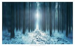 Icy Forest (AmBasteir) Tags: nikond810 motionblur nikkorlens landscape forest wald wood mood snow schnee erzgebirge sachsen oremountains nature outdoors nikkor1635f4 blue icy tree baum lichtung