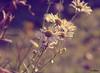autumn flowers (oalbinai) Tags: nature flowers flora fauna m