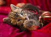 20121015_7755c (Fantasyfan.) Tags: kitten yule fantasyfanin christmas