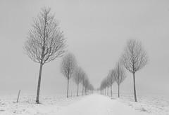 Disapperance / Desaparición (toncheetah) Tags: trail path trees winter wintermood minimalism minimalist cloudy hazy vanishing oni