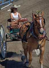 Horse & Buggy Competition (swong95765) Tags: horse animal competition woman rider buggy cute
