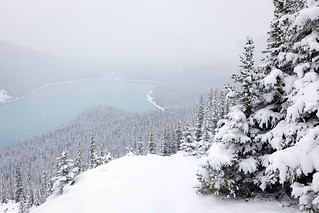 Snowing Over Peyto