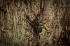 unknown (dustaway) Tags: arthropoda arachnida araneae araneomorphae family genus australianspiders spideronbark tullera northernrivers nature nsw australia