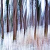 Abstract (Stefano Rugolo) Tags: stefanorugolo pentax k5 pentaxk5 kepcorautowideanglemc28mm128 abstract icm forest tress hälsinglad sweden blur wood 2018 newyear