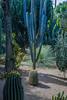 DSC_2706 (andrey.salikov) Tags: 180550mmf3556 jardinmajorelle magnifique marrakech marrakesh nikond60 rueyvessaintlaurent،marrakesh40090 atrevida beautiful buenisima colour colourfulplaces dreamscene europe fantastic fantasticcolors fantasticplaces foto free goodatmosphere gorgeous harmonyday2017 harmonyvision impressive light lovely moodshot nice niceday niceimage niceplace ottimo peacefulmind photo places relaxart scenery sensual sensualstreet streetlight stunning superbshots tourism travel trip wonderful марокко марракеш садмажорель отпуск туризм