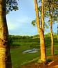 Lakatura view (faruqlib) Tags: green paddy field bangladesh lakatura sylhet valley hill omar17