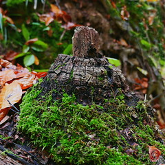 Wood mountains (ohio57) Tags: mos bos natuur closeup ohio57 hout