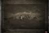 Olympic Range (MBates Foto) Tags: ambientlight availablelight blackandwhite daylight daytime existinglight forest monochrome mountains nikkorlense nikon nikond7000 olympicnationalpark olympicrange outdoors parksandrecreation washington unitedstates