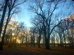 trees (#KPbIM) Tags: 2017 fall november michigan starr jaycee royaloak park blue light sun evening color trees serene yellow outdoors night nature leaves