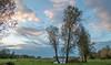 October (Jorden Esser) Tags: 2017 october middendelfland geese grass landscape trees water