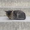 Seni eve götürmemek için kendimi zor tuttum kedi 😔 (ilterocktive) Tags: seni eve götürmemek için kendimi zor tuttum kedi 😔