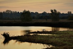 Swan Sunrise. (pstone646) Tags: swan sunrise bird nature lake wildlife wildfowl sky clouds trees reflections stodmarsh kent
