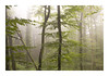(Anscheinend) Tags: trees tree bäume forest wood woods foret fog dust mist nebel dunst brume brouillard niebla nebbia neblina croatia kroatien plitvice nationalpark rainy moody regen pluie