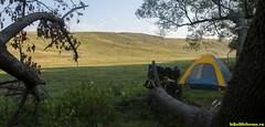 Утро, с горы спускается полчище баранов!
