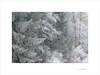 Las formas del invierno (E. Pardo) Tags: invierno winter formas formen forms trees árboles bäume wald bosque forest nieve schnee snow frío kalt cold gesäuse steiermark austria