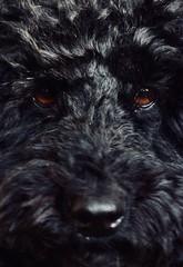 Closer..... (rienschrier) Tags: dichtbij dier animal closeup dog hond