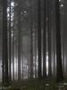 Donker bos - Dark wood (naturum) Tags: 2017 bos dark december deutschland donker duitsland forest geo:lat=4782070476 geo:lon=932958126 geotagged germany heiligenberg verticaal vertical winter wood woud badenwürttemberg deu