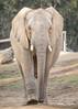 Luti (ToddLahman) Tags: luti africanelephant elephants elephant elephantvalley sandiegozoosafaripark safaripark canon7dmkii canon canon100400 closeup escondido eyelock beautiful mammal outdoors portrait