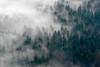 Nebelwald (Luftknipser) Tags: deutschland renemuehlmeier land tillenbergdyleň neualbenreuth luftbild bayern landkreistirschenreuth oberpfalz aerial airpicture by deu fotohttprenemuehlmeierde germany luftaufnahme mailrebaergmxde upperpalatinate bavaria httpsdewikipediaorgwikidylec588 vonoben landschaft nebel nature lichtundschatten