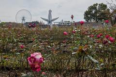 Banpaku Park(大阪万博記念公園) (Hideki Iba) Tags: flower tower osaka suita japan nikon d850 nikond850 日本 吹田 大阪 万博公園 太陽の塔 空 庭園