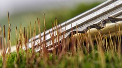 Diagonal (Renate Bomm) Tags: 2017 7dwf eifel macroorcloseup meterich renatebomm samyangaf35mmf28 silvester sonyilce6000 project365 wald intothewoods madeofmetal green moos 01365152 02365152