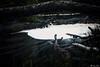 AY6A5536 (fcruse) Tags: cruse crusefoto 2018 vinter canon5dmarkiv natur skog nature forest tyrestanationalpark longexposure stockholm sweden se tyresta