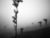 Misty Trees (Ravikumar Jambunathan) Tags: nature travel mist fog trees tea plantation ravikumar jambunathan kerala munnar